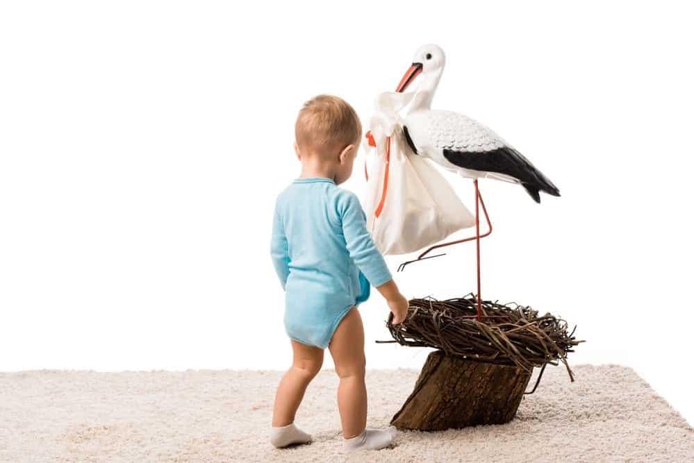 Dziecko patrzy na bociana jakby chciało zapytać - czy Ty mnie przyniosłeś na świat?